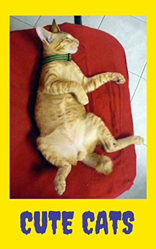 Cats : CUTE CATS : Picture Book (Cat Lovers/Happy Moments :Katzen, Chats, Gatos, Katten, Gatti, 猫 ) (Cute Cat Series 1) (Cats Pictures Persian)