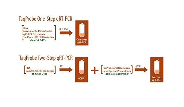 One-Step taqprobe qrt-pcr-rox: Amazon.es: Amazon.es