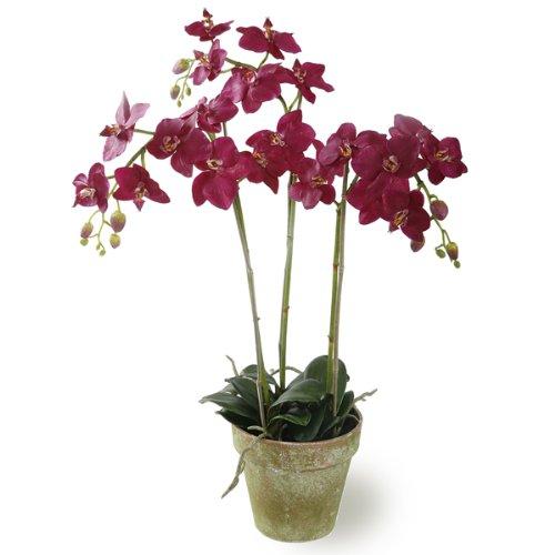 Jane Seymour Botanicals 3 Stems Phalaenopsis Orchid in Pot, 27-Inch, Beauty by Jane Seymour Botanicals