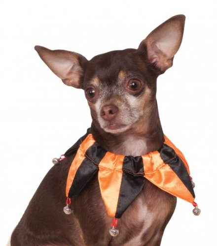 The Joker Pet Costume (Rubies Costume Company Jester Pet Collar, Small/Medium, Orange and)