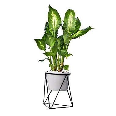 Fieren Outdoor/Indoor Planter Pots/Succulent pots/Stand for 4.3  Pot House Plant White Ceramic Round Bowl with Metal Air Plant Stand for Succulent Planter (Black)