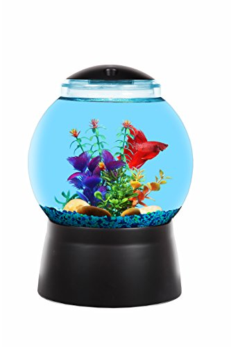 BettaTank 1-Gallon Fish Bowl with LED Lighting