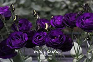 50pcs Multi-colores Lisianthus Semillas Semillas hermosas Eustoma grandiflorum Sapphire hermosas Semillas de flores Semillas Bonsai 05