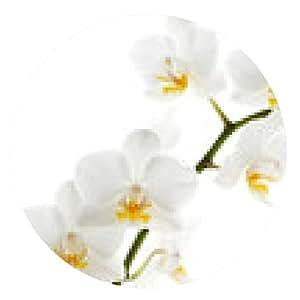 alfombrilla de ratón orquídea blanca aislada en blanco - ronda - 20cm