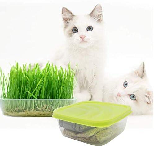 Kit de cultivo de hierba de gato, bricolaje kit de germinación de hierba para mascotas orgánico