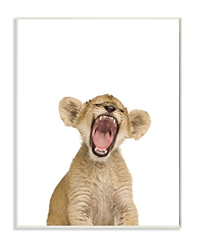 Stupell Home Décor Baby Lion Cub Studio Photo Wall Plaque Art, 10 x 0.5 x 15, Proudly Made in USA ()