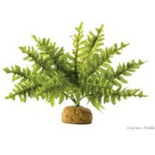- ROLF HAGEN Exo Terra Rainforest Plant Boston Fern (One Size) (May Vary)