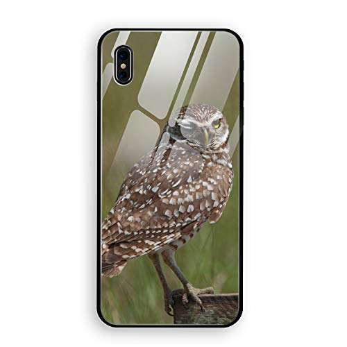 Animal Burrowing Owl Birds Case for iPhone X(iPhone 10), Shock-Absorption Bumper Cover, Anti-Scratch Clear Tempered Glass Back
