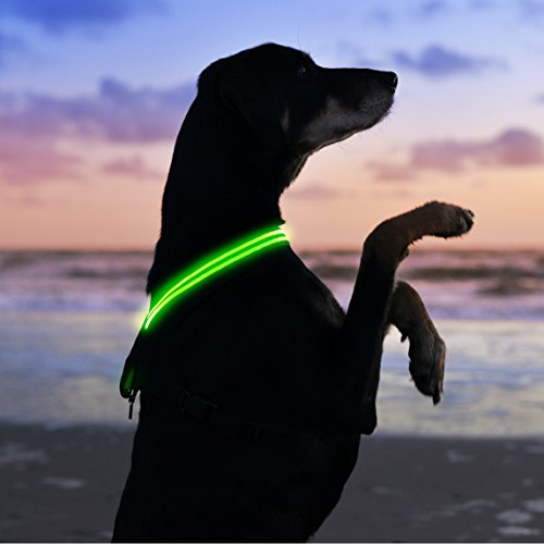 LED Dog Harness Rechargeable Available