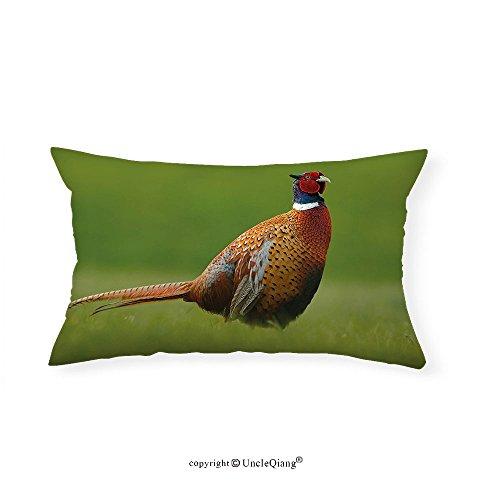 VROSELV Custom pillowcasesBird Common Pheasant with Long Tail on the Green Grass Meadow Habitat Czech Republic for Bedroom Living Room Dorm Green Orange Red(16''x20'') by VROSELV