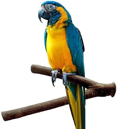 Soporte de madera para jaula de pájaros, loros, periquitos, cacatúas, agapornis: Amazon.es: Productos para mascotas