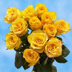 GlobalRose 1 Dozen Yellow Roses - Amazingly Radiant! (Dozen Stem One Long)
