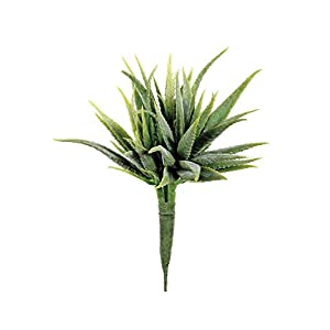 "Afloral Mini Aloe Pick in Green - 5"" Wide 39"