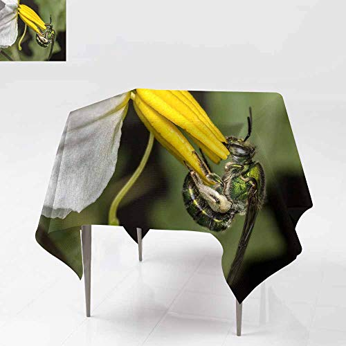 (AFGG Spillproof Tablecloth,bee Euglossa sp Pollinating Flower - Green Bee Close up - Aga,Dinner Picnic Table Cloth Home Decoration,36x36 Inch pos)