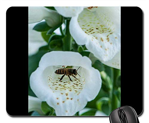 Mouse Pad - Bees Close-Up Pistil The Pollen Insects -