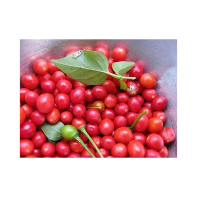 Sherwoods Seeds Red Chiltepin Heirloom Pepper Premium Seed Packet + More : Garden & Outdoor
