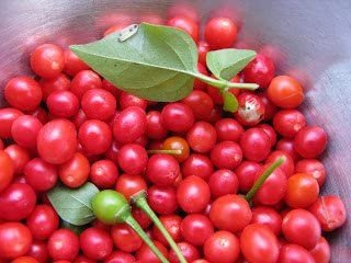 Premium American Heirloom Texas Chiltepin Hot Pepper Seeds-M 050 25