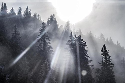 Sunshine Through Pine Trees Black and White Photo Art Print Mural Giant Poster 54x36 inch ()