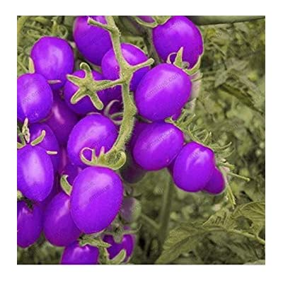 A Pack 100 Pcs Purple Cherry Tomatoes Seed Balcony Fruits Seed Vegetables Potted Bonsai Potted Plant Tomato Seeds : Garden & Outdoor