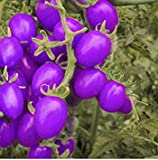 A Pack 100 Pcs Purple Cherry Tomatoes Seed Balcony Fruits Seed Vegetables Potted Bonsai Potted Plant Tomato Seeds