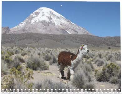 Llama Calendar - Best South America Images in Snow Capped Andes Mountains of Bolivia and Peru Photo #4