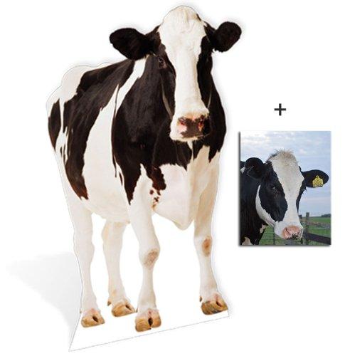 Vache - faune / animale Personnage Découpé Dans Du Carton / Silhouette En Carton: Grandeur Nature / Standee / Stand-Up - Avec Star Photo (Dimensions 25x20 Cm) BundleZ-4-FanZ Fan Packs