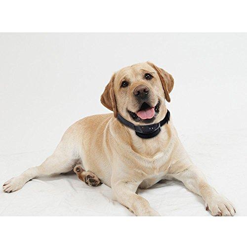 Zacro DC265 Dog No Bark Collar