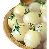 甘い クリームチェリー ミニトマト 種 6粒