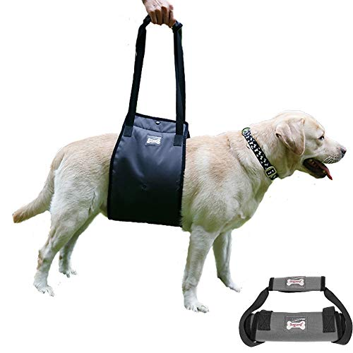 Bonaweite Dog Lift Harness, Support Sling Helps Dogs with Weak Front or Rear Legs Stand Up, Walk, Get Into Cars, Climb Stairs. Best Alternative to Dog ()
