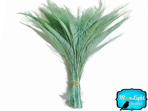 - Peacock Feathers 5 Pieces Aqua Green Bleached Peacock Swords Cut