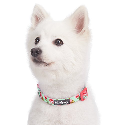 Blueberry Pet 8 Patterns Spring Scent Inspired Floral Rose Print Turquoise Dog Collar, Medium, Neck 14.5