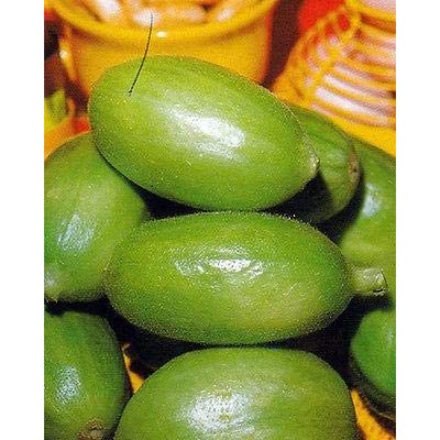 Carosello Barese Cucumber Seeds (40 Seed Pack) : Garden & Outdoor