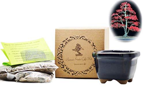 9GreenBox: Bonsai Seed Kit - Red Japanese Maple
