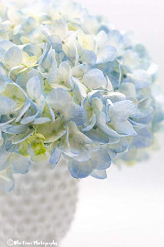 (Botanical Wall Art, Hydrangea Print, Blue Flower Art, Flower Photography, Shabby Chic Home Decor, Country, Floral Still Life, Portrait, Sizes Available from 5x7 to 20x30.)