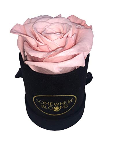 Bloom Box - Somewhere Blooms Eternity Rose, Suede Gift Box, Preserved Fresh Flower, Long Lasting, Perfect Luxury Gift for Mother's Day, Birthday, Anniversary (Pink Peach, Black Box)