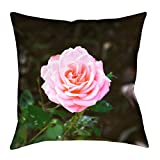 ArtVerse Providence Doucet Pink Rose 40'' x 40'' Floor Pillows Double Sided Print with Concealed Zipper & Insert