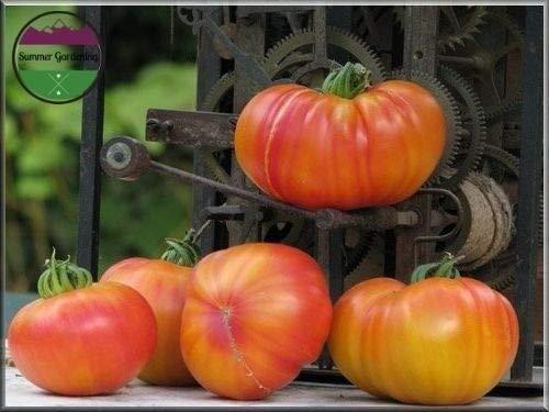 Heirloom Organic Old German Tomato 50 Seeds (Bi-Color Beefsteak) ()