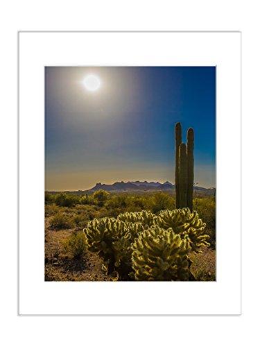 Desert Sunset Photo Cactus Nature Landscape Scenic Picture 8