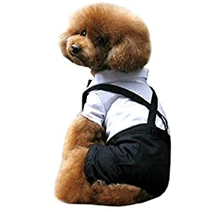 Alfie Pet by Petoga Couture - Lucas Tux Costume with Bow - Color: Black, Size: Small