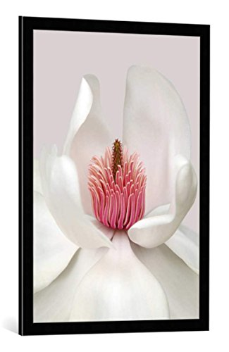 - kunst für alle Framed Art Print: Brian Haslam Magnolia - Decorative Fine Art Poster, Picture with Frame, 23.6x33.5 inch / 60x85 cm, Black/Edge Grey