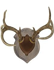 Walnut Hollow Country Deluxe Antler Display Kit de montaje en madera de nogal macizo para ciervos mulos y venados cola blanca