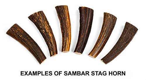 Texas Knifemakers Supply: Sambar Stag Horn - How Long Mail Is Shipping Priority