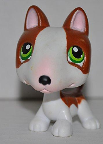 Toy Bull Terrier - 9