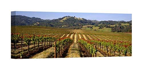 Easy Art Prints Panoramic Images's 'Vineyard, Geyserville, California, USA' Premium Canvas Art 24 x 8