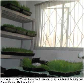 Dog & Cat Wheatgrass Kit de cultivo para Pet – Perros Gatos ...