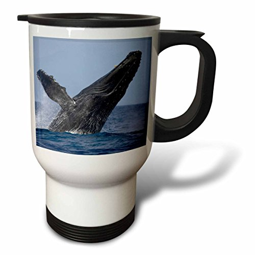 3dRose tm_89830_1 Hawaii, Big Island, Humpback Whale Breaching Us12 Pso0004 Paul Souders Travel Mug, 14-Ounce, Stainless Steel by 3dRose