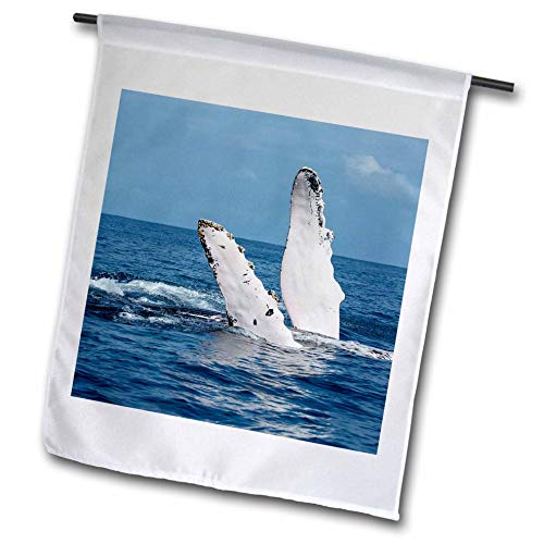 3dRose Danita Delimont - Whales - A Humpback Whale Floats on its Back, Silver Bank, Dominican Republic - 12 x 18 inch Garden Flag (fl_312990_1)