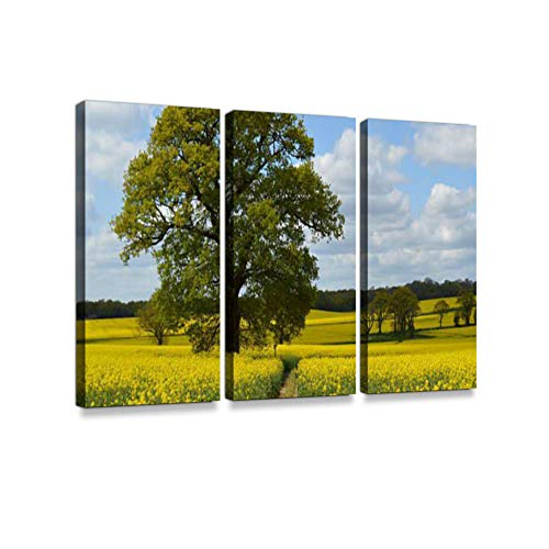 Rapeseed Crop Field in Rural West Sussex.Print On Canvas Wall Artwork Modern Photography Home Decor Unique Pattern Stretched and Framed 3 Piece