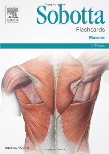 Sobotta Flashcards Muscles 1e