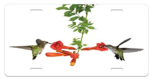 Hummingbirds License Plate by Ambesonne, Two Hummingbirds Sipping Nectar from a Trumpet Vine Blossoms Summertime, High Gloss Aluminum Novelty Plate, 5.88 L X 11.88 W Inches, Red Black (Sipping Nectar)